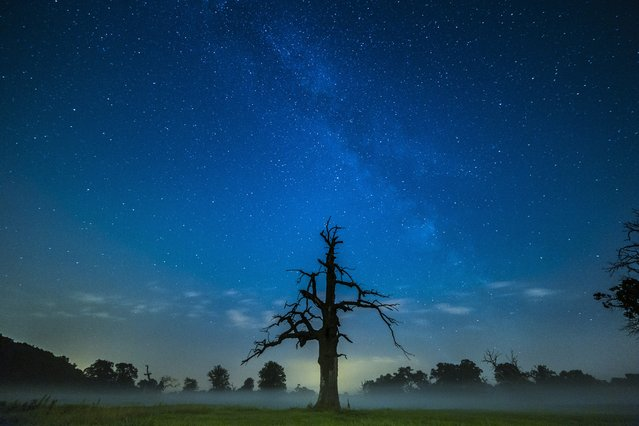 A picture made available on 17 July 2015 shows the bright line of the Milky Way above the old oaks at the Rogalin landscape Park in Rogalin village, near Poznan, on the night of 16 July 2015. (Photo by Lukasz Ogrodowczyk/EPA)