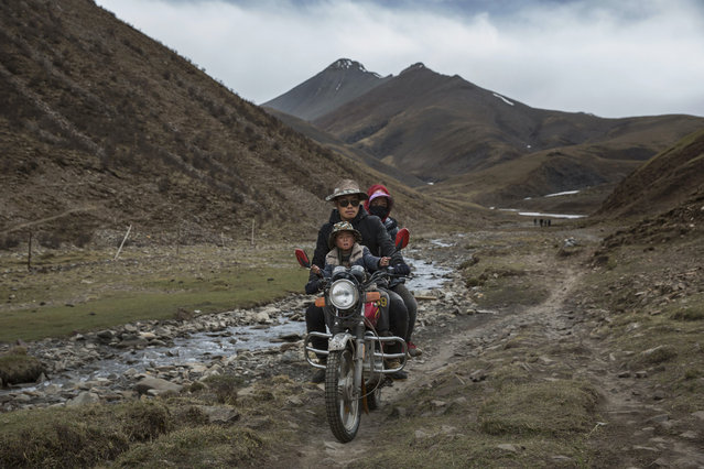 A Tibetan family ride on a motorcycle as they return after a day of working in the mountains at a temporary camp for cordycep pickers on May 23, 2016 on the Tibetan Plateau near Zadoi in the Yushu Tibetan Autonomous Prefecture of Qinghai province. (Photo by Kevin Frayer/Getty Images)