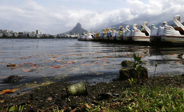Rubbish are seen on the banks of Rodrigo de Freitas Lagoon in Rio de Janeiro August 13, 2014. (Photo by Ricardo Moraes/Reuters)