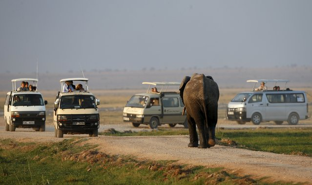 An elephant walks towards tourists in Amboseli National park, Kenya, August 8, 2015. (Photo by Goran Tomasevic/Reuters)