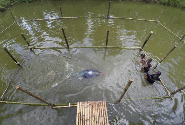In this July 14, 2017 photo, a Bangladeshi trainer shows a swimming technique, as children watch during a swimming training session at a pond in the Shishu Polli Plus area in Sreepur village, near Dhaka, Bangladesh. Drowning is a major cause of death among youngsters in Bangladesh, claiming up to 18,000 children under the age of 18 every year, and 43 percent of deaths among children under 5, according to a 2011 government survey. A British charity has partnered with a Bangladeshi research group to offer swimming lessons in this central Bangladeshi farming village for children from poor, rural families. (Photo by A.M. Ahad/AP Photo)