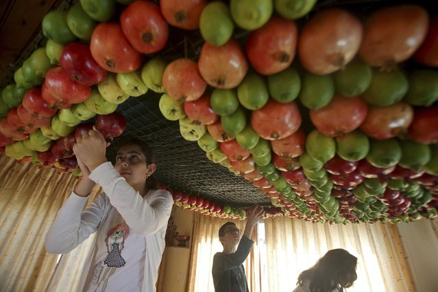 Members of the Samaritan sect decorate a traditional hut known as a sukkah with fruits and vegetables on Mount Gerizim, on the outskirts of the West Bank city of Nablus October 6, 2014. A sukkah is a ritual hut used during the week-long Jewish holiday of Sukkot which begins Monday at sundown. (Photo by Abed Omar Qusini/Reuters)
