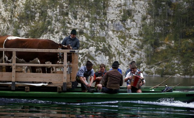 Bavarian farmers play instruments as they transport their cows on a boat over the picturesque Lake Koenigssee, Germany, October 3, 2015. (Photo by Michael Dalder/Reuters)