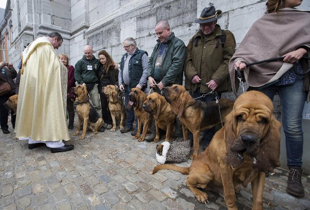 Belgian priest Philippe Goosse (L) blesses Bloodhound dogs during a religious and blessing ceremony for animals, outside the Basilica of St Peter and Paul in Saint-Hubert, Belgium November 3, 2015. (Photo by Yves Herman/Reuters)