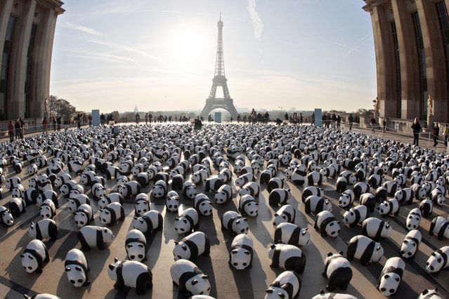 1,600 paper mache pandas set up by members of WWF (World Wildlife Fund) are pictured on October 18, 2008 on the Parvis des droits de l'Homme at Paris Trocadero esplanade to symbolize there are only 1600 pandas left on earth and to call people to do their part in helping to reverse the deterioration of our natural environment. (Photo by Francois Guillot/AFP Photo)