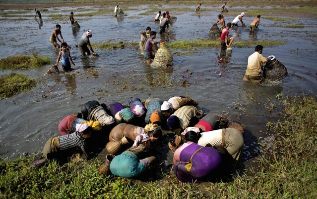 Tribal Tiwa people fish together as they take part in the Jonbeel festival near Jagiroad, India, Friday, January 23, 2015. (Photo by Anupam Nath/AP Photo)
