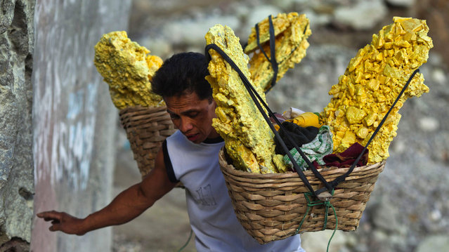 A miner carries baskets of sulphur (sulfur) stones out of the crater at the Kawan Ijen volcano in East Java, Indonesia, on Friday, August 16, 2013. Miners collect sulphur from the active volcano daily to sell to local factories where it is used to refine sugar, make matches and medicines. (Photo by Angel Navarrete/Bloomberg)