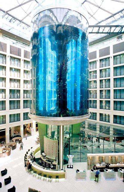 Aquarium In Radisson Sas Hotel