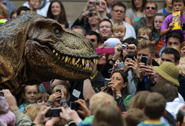Visitors photograph an animatronic Tyrannosaurus Rex at the National Museum of Scotland, July 29, 2011. (Photo by David Moir/Reuters)