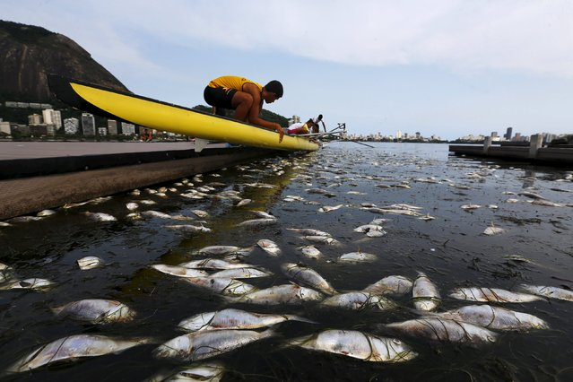 Dead fish are pictured next to a rowing athlete as he puts his boat on the water before a training session at the Rodrigo de Freitas lagoon, in Rio de Janeiro April 13, 2015. About 500kg of fish have been removed from the lagoon since last week after sea cold water got into the lagoon, authorities said, according to local media. Rodrigo de Freitas lagoon will host the rowing and canoe sprint competitions in the 2016 Olympic Games. (Photo by Ricardo Moraes/Reuters)
