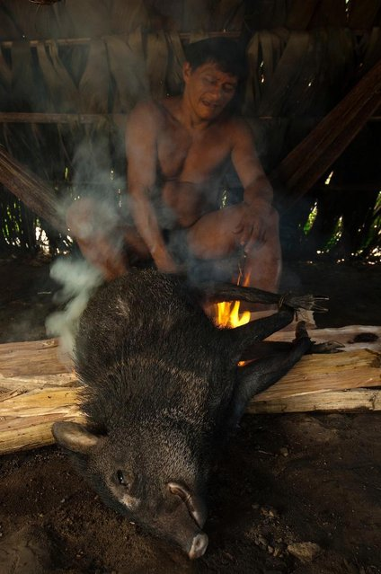 A peccary pig was seen roasting on an open flame. (Photo by Pete Oxford/Mediadrumworld.com)