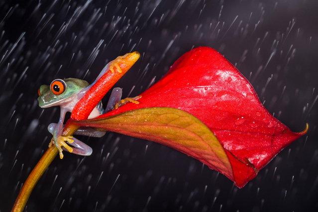 """""""Raining"""". (Photo by Kutub Uddin)"""