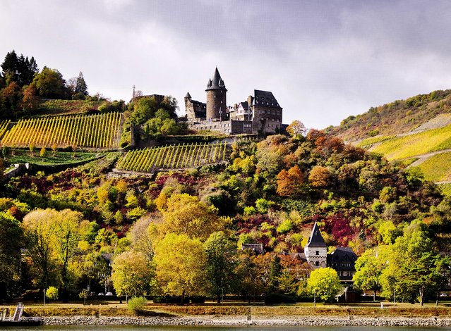 An old castle is seen above colorful trees and vineyard looking over the river Rhine near the village of Bacharach, Germany, on Wednesday, October 24, 2018. (Photo by Michael Probst/AP Photo)