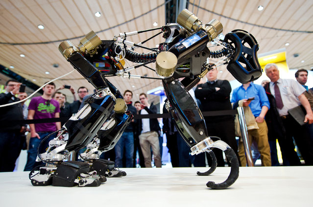 """Robot """"Charlie"""" of the German Research Center for Artificial Intelligence (DFKI) is on display at the CeBIT fair in Hanover, Germany, March 13, 2014. Great Britian is this year's partner country. The fair runs until March 14, 2014. (Photo by Christoph Schmidt/EPA)"""