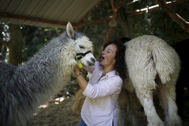 Lisa Vella-Gatt, 46, jokes with an alpaca in her farm near Benfeita, Portugal May 11, 2015. (Photo by Rafael Marchante/Reuters)