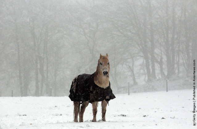 Snow falls as a horse stands in a snow covered field  near Dulverton