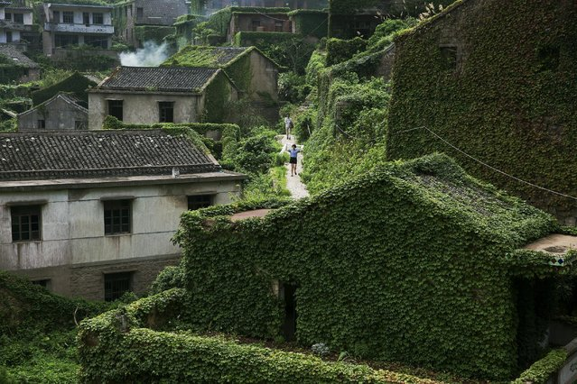 Tourists walk between buildings covered with vines in the abandoned fishing village of Houtouwan on the island of Shengshan July 26, 2015. Just a handful of people still live in a village on Shengshan Island east of Shanghai that was once home to more than 2,000 fishermen. Every day hundreds of tourists visit Houtouwan, making their way on narrow footpaths past tumbledown houses overtaken by vegetation. (Photo by Damir Sagolj/Reuters)