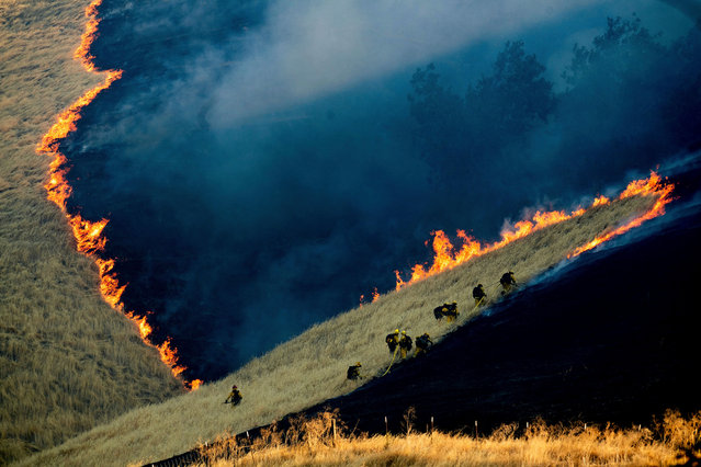Firefighters battle the Marsh Fire near the town of Brentwood in Contra Costa County, Calif., Saturday, August 3, 2019. (Photo by Noah Berger/AP Photo)