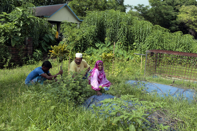 """In this July 28, 2017 photo, Bangladeshi woman Samela Begum, right, cries near the graves of her two sons who drowned in a swamp in May, as her husband Monir Hossain, center, and another person plant a tree at a graveyard in Noyadda village, Keraniganj, near Dhaka, Bangladesh. """"All the mothers, my sisters, please, remain alert"""", Samela Begum said, weeping. """"Please teach your sons to swim, otherwise your laps will become empty like mine"""". In an effort to help mothers like Begum, a British charity has partnered with a Bangladeshi research group to offer swimming lessons in this central Bangladeshi farming village for children from poor, rural families. (Photo by A.M. Ahad/AP Photo)"""