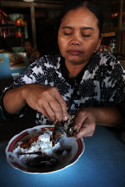 Bat seller Sukarwati eats a bat on July 30, 2009 in Yogyakarta, Indonesia. Sukarwati and her family have hunted bats in the Imogiri region for generations, capturing more than 800 bats per month. The Sukarwati family believe that the meat from the bat heals asthma and respiratory problems and it is a great honour for them knowing that the meat that they provide will help ease people's health ailments.  (Photo by Ulet Ifansasti)