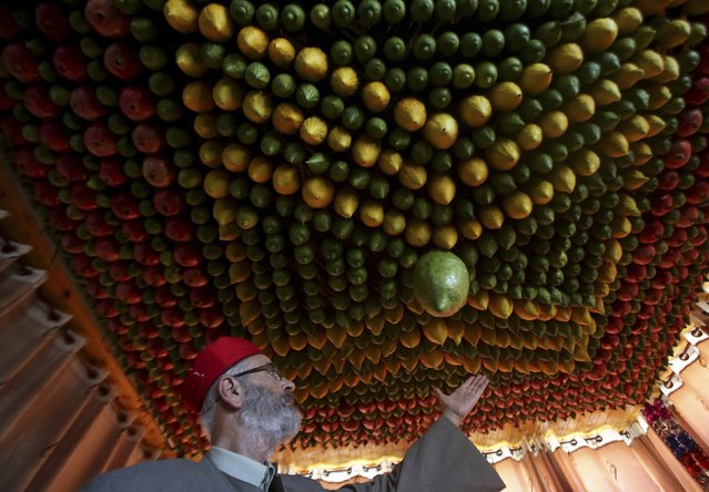 A member of the Samaritan sect decorates a traditional hut known as a sukkah with fruits and vegetables on Mount Gerizim, on the outskirts of the West Bank City of Nablus October 6, 2014. (Photo by Abed Omar Qusini/Reuters)