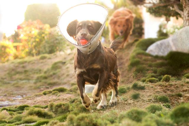 Dog photos by Jessica Trinh