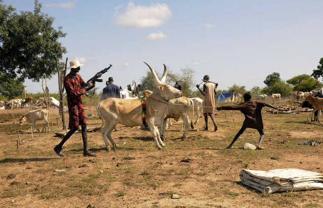An armed cattle keeper fires bullets in the air to intimidate raiders as they prepare to lead their herds of cattle home after grazing at a camp outside the capital Juba October 18, 2014. (Photo by Jok Solomon/Reuters)