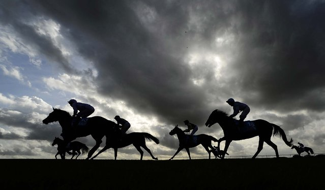 Runners pull up after finishing The Dubai European Breeders' Fund Fillies' Nursery Handicap Stakes at Newmarket racecourse on October 17, 2014 in Newmarket, England. (Photo by Alan Crowhurst/Getty Images)
