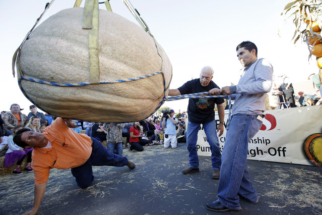 Ruben Frias, at right, of Napa, Calif. gets his pumpkin lifted for a weigh-in with the help of Brad Porter, bottom left, and Joe Borges at the Annual Safeway World Championship Pumpkin Weigh-Off Monday, October 12, 2015, in Half Moon Bay, Calif. (Photo by Marcio Jose Sanchez/AP Photo)