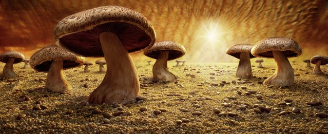 """Mushroom Savanna"". (Photo by Carl Warner)"