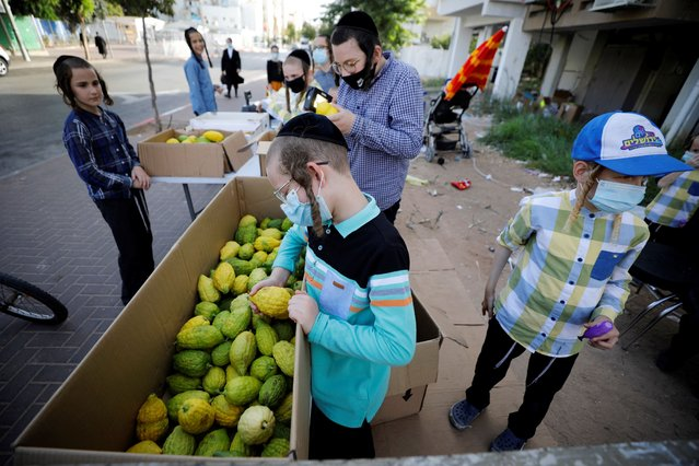 Ultra-Orthodox Jewish boys look at Etrog citrus fruits used in rituals during the upcoming Jewish holiday of Sukkot, amid Israel's second national lockdown to battle the coronavirus disease (COVID-19) crisis, in Ashdod, Israel on September 30, 2020. (Photo by Amir Cohen/Reuters)