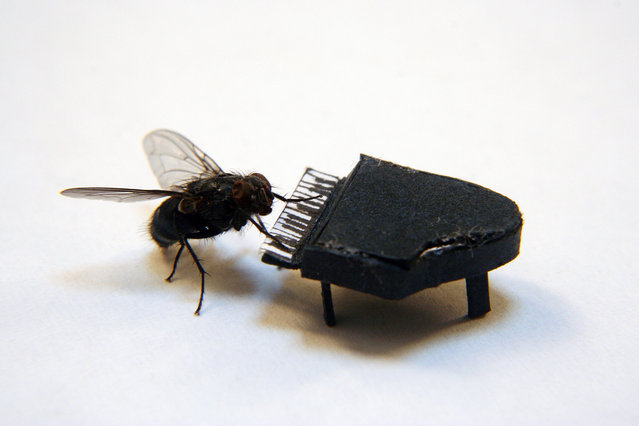 The Adventures Of Mr. Fly by Nicholas Hendrickx