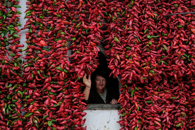 "A woman poses for a picture as bunches of paprika hang on the walls of her house to dry in the village of Donja Lakosnica, Serbia October 6, 2016. Donja Lokosnica is the Serbian ""capital of paprika"", since almost all of the 1300 inhabitants are involved in growing paprika. As autumn approaches, the whole village turns red, because of many threads of dried peppers, that hang around Lokosnica, waiting for their winter use. Each of these paprika threads is handmade, still dried according to traditional techniques, assisted solely by the sun and fresh air. (Photo by Marko Djurica/Reuters)"