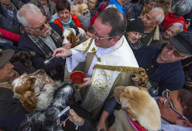 Belgian priest Philippe Goosse (C) blesses dogs held by their owners during a religious and blessing ceremony for animals, outside the Basilica of St Peter and Paul in Saint-Hubert, Belgium November 3, 2015. (Photo by Yves Herman/Reuters)