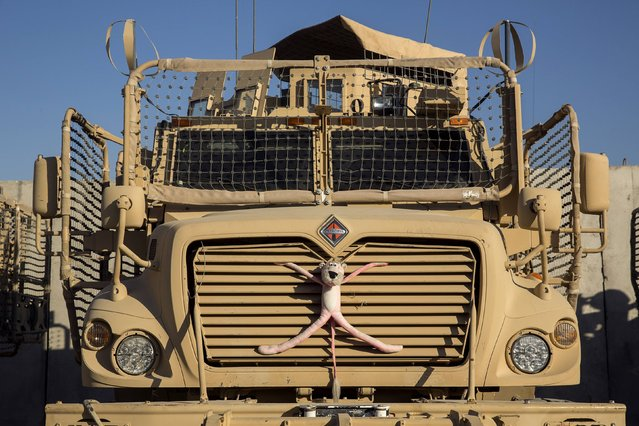 A stuffed animal is strapped to the front of an MRAP vehicle belonging to Dragon Company of the 3rd Cavalry Regiment on forward operating base Gamberi in the Laghman province of Afghanistan December 28, 2014. (Photo by Lucas Jackson/Reuters)