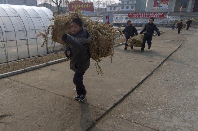 Boys carrying woven blankets at Ch'ongsan-ni Cooperative Farm, Feburary 2012. (Eric Testroete)