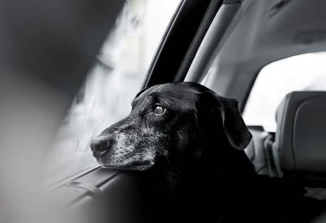 Second place, Oldies. Rescue dog Nilo, by Rachele Z. Cecchini from Austria. (Photo by Rachele Z. Cecchini/Dog Photographer of the Year 2018)