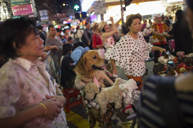 A woman carries a dog on a bicycle as buskers perform in Sai Yeung Choi Street South in Mongkok district, Hong Kong, China, 28 July 2018. (Photo by Jerome Favre/EPA/EFE)