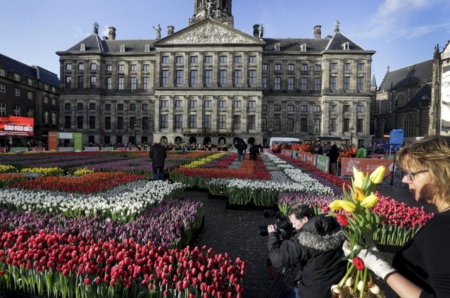 Tulips are seen placed in front of the Royal Palace at the Dam Square to celebrate the beginning of the tulip season in Amsterdam, the Netherlands January 16, 2016. (Photo by Michael Kooren/Reuters)