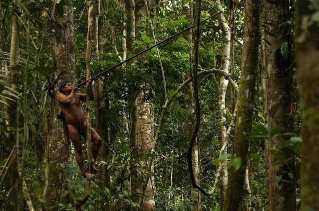 Warriors hunt their prey by climbing trees and shooting them with long blowpipes. (Photo by Pete Oxford/Mediadrumworld.com)