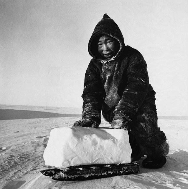 A young inhabitant of the Melville Peninsula uses a small sled to transport a block of frozen snow home to melt for tea. (Photo by Hulton-Deutsch Collection/Corbis via Getty Images)