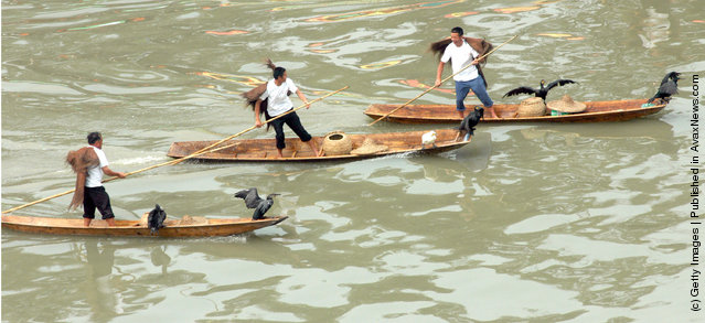Chinese people row boats carrying cormorants during a re-enactment of ancient fishing