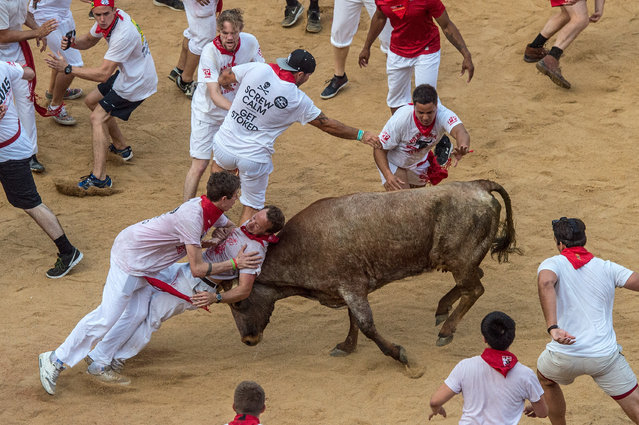 "Revellers attempt to avoid a fighting calf inside Pamplona bullring during the second day of the San Fermin Running of the Bulls festival on July 7, 2015 in Pamplona, Spain. The annual Fiesta de San Fermin, made famous by the 1926 novel of US writer Ernest Hemmingway entitled ""The Sun Also Rises"", involves the daily running of the bulls through the historic heart of Pamplona to the bull ring. (Photo by David Ramos/Getty Images)"