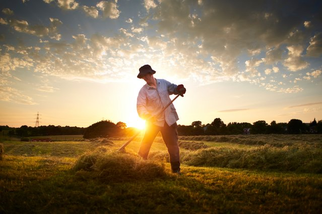 Farmers making hay while the sun shines in Bury, UK on July 20, 2016. The race is on to bale the cut grass before the predicted thunderstorms arrive. (Photo by Christopher Thomond/The Guardian)