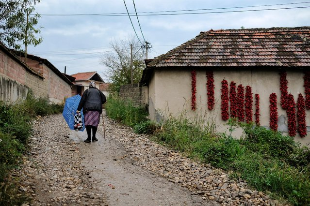 A woman walks along a road as bunches of paprika hang on the walls of houses to dry in the village of Donja Lakosnica, Serbia October 6, 2016. (Photo by Marko Djurica/Reuters)
