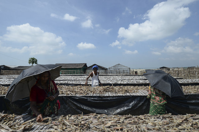 Labourers arrange fish to be sundried at a processing yard in Cox's Bazar on October 9, 2020. (Photo by Munir Uz Zaman/AFP Photo)