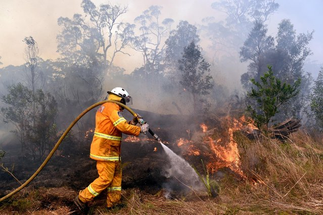 A firefighter extinguishes a bushfire on a property at Swan Bay in Port Stephens, Australia, November 6, 2016. (Photo by Paul Miller/Reuters/AAP)