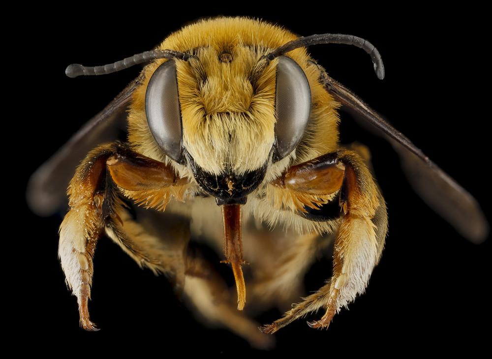 """""""Bee Heads"""""""