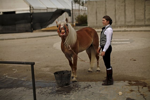 An Andalusian horsewoman waits for the animal to drink water before a classical dressage contest during the Sacab Andalusian Horse Show in Coin, southern Spain, April 12, 2015. (Photo by Jon Nazca/Reuters)