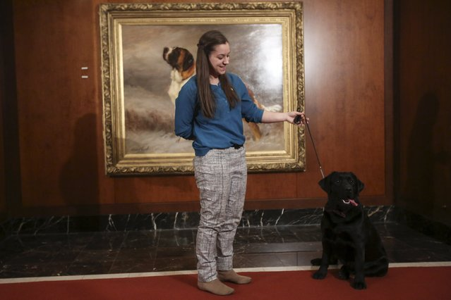 Theresa Viesto poses for a photo with her Black Lab Lark following a press event for the American Kennel Club to reveal the nations most popular dog breeds in the Manhattan borough of New York, February 22, 2016. (Photo by Carlo Allegri/Reuters)